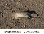 Dead Bird. Road Wars   Death O...