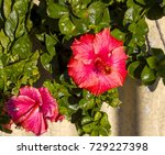 carmine  pink suffused with...   Shutterstock . vector #729227398