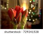Amaryllis With Blurred Light...