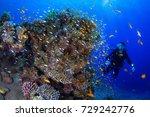 wide angle underwater landscape....   Shutterstock . vector #729242776