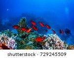 school of big eye fish and... | Shutterstock . vector #729245509