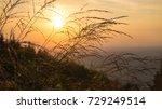 grass with orange red... | Shutterstock . vector #729249514