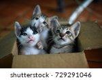 Stock photo three kittens in the paper box 729291046