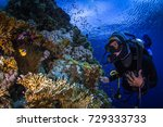 Small photo of Adventure while diving. Beautiful colorful reefs of the Red Sea. Ras Mohammed. Egypt, Red Sea.