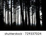 in the forest | Shutterstock . vector #729337024