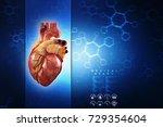 3d illustration  anatomy of...   Shutterstock . vector #729354604
