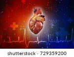 3d illustration  anatomy of... | Shutterstock . vector #729359200