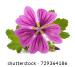 Mallow Plant With Flower...