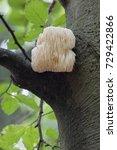 rare lion's mane mushroom ... | Shutterstock . vector #729422866