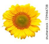 flower of sunflower isolated on ... | Shutterstock . vector #729466738
