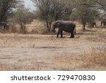 elephant in tanzania east africa   Shutterstock . vector #729470830