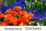 beautiful purple and orange...   Shutterstock . vector #729474694