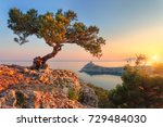 amazing tree growing out of the ... | Shutterstock . vector #729484030