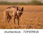 indian striped hyena yawning | Shutterstock . vector #729509818