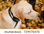 dog with electric shock collar... | Shutterstock . vector #729570370