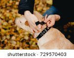dog with electric shock collar... | Shutterstock . vector #729570403