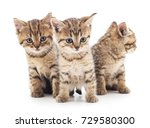 Stock photo three little kittens isolated on the white background 729580300