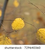 beech leaves with back light in ... | Shutterstock . vector #729640360