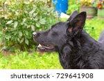 caucasian shepherd dog | Shutterstock . vector #729641908