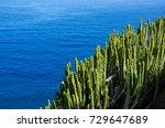 cactus green nature plant... | Shutterstock . vector #729647689