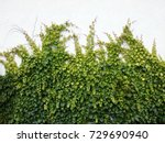 vine on wall | Shutterstock . vector #729690940