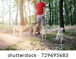 Stock photo dog walker with dogs enjoying in park 729695683