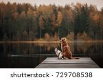 two dogs outdoors  friendship ... | Shutterstock . vector #729708538