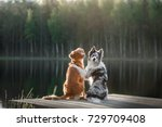 two dogs outdoors  friendship ...   Shutterstock . vector #729709408