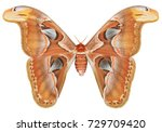 real butterfly colour  ... | Shutterstock . vector #729709420