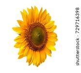 flower of sunflower isolated on ... | Shutterstock . vector #729716398