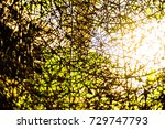 defocuses scene of rattan ... | Shutterstock . vector #729747793