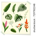 different kinds of leaves and... | Shutterstock .eps vector #729782248