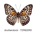 Stock photo butterfly neurosigma siva nonius isolated on white 72982090