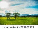 trees in rice field   Shutterstock . vector #729832924