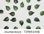 the leaves are laid out in the... | Shutterstock . vector #729851548