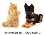 persian kitten attacking the... | Shutterstock . vector #729858040