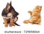 persian kitten attacking the... | Shutterstock . vector #729858064