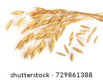 oat spike with grains isolated...   Shutterstock . vector #729861388