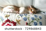 Stock photo a sweet and beautiful little red and white kitten cat lying stuck between a pillow and a white sofa 729868843