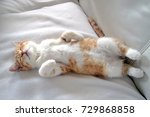 a sweet and beautiful little... | Shutterstock . vector #729868858