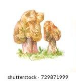 gyromitra mushroom  watercolor... | Shutterstock . vector #729871999