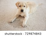 cute puppy lying on carpet near ... | Shutterstock . vector #729874843