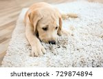 Stock photo cute puppy on dirty rug at home 729874894