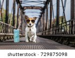 Small photo of cool jack russell dog abandoned at rail train track on a bridge, waiting to be adopted, wearing sunglasses