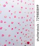 beautiful pink flowers...   Shutterstock . vector #729880849