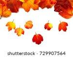 autumnal leaves of the viburnum ... | Shutterstock . vector #729907564