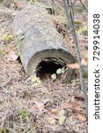 Small photo of decomposition of a tree trunk