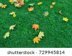 fallen red and yellow maple... | Shutterstock . vector #729945814