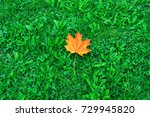 fallen yellow maple leaves on... | Shutterstock . vector #729945820