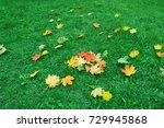 fallen red  yellow maple leaves ... | Shutterstock . vector #729945868